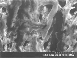 罗宾逊背散射电子探测器(S8.6)介绍 - 驰奔 - ------DEMA 驰奔-------
